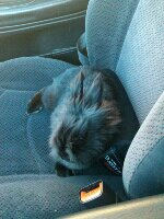Pepper the traveling bunny