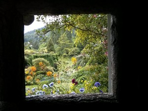 A view to a bloom, Butchart Gardens