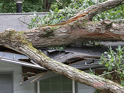 Wind and Storm Damage Restoration in Philadelphia, PA – First Choice Restoration – Wind Damaged Property Image