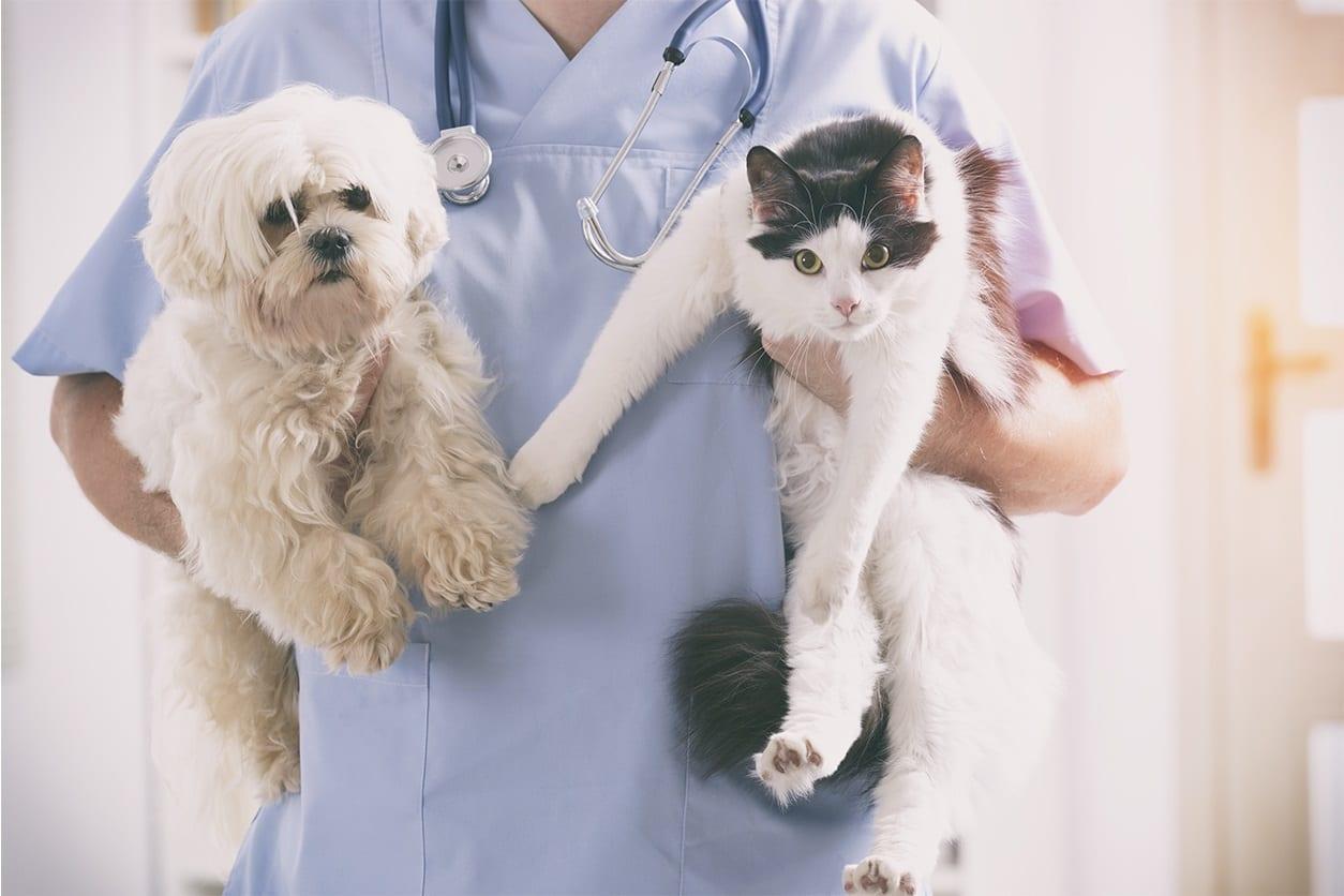 Oxford Veterinary Hospital