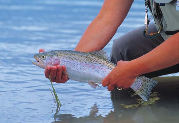 Cutthroat Trout Fishing