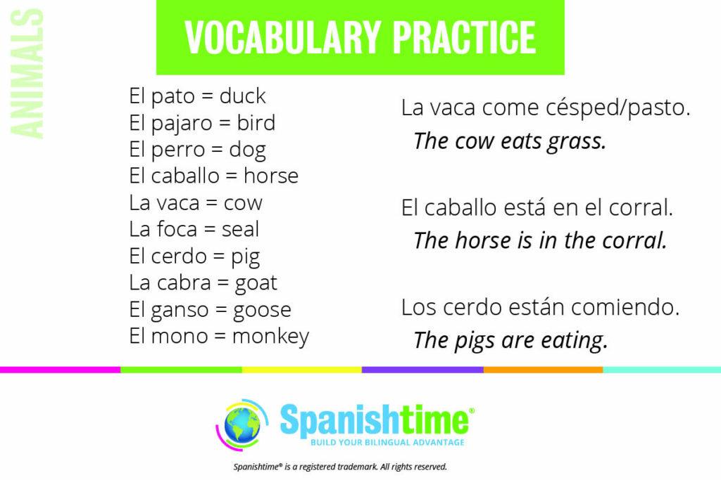 Spanish Vocabulary Practice