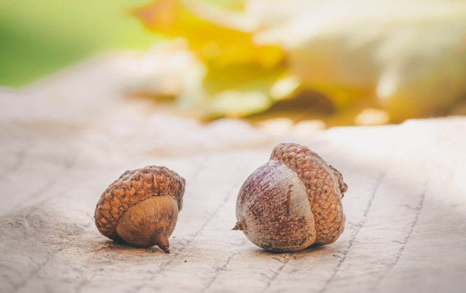 Is it time to freak out or is it just an acorn?