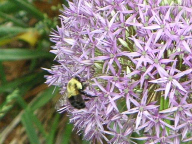 Focus Garden Plant 1