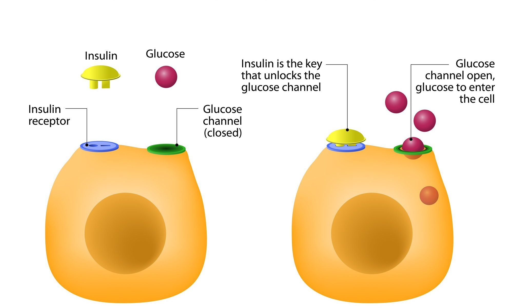 optimize insulin and prevent diabetes