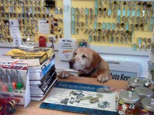 locksmith in sarasota dog_in_key_shop