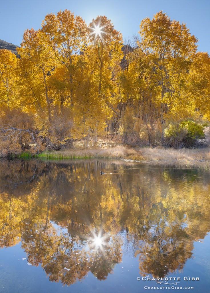 Rush Creek Fall 2013