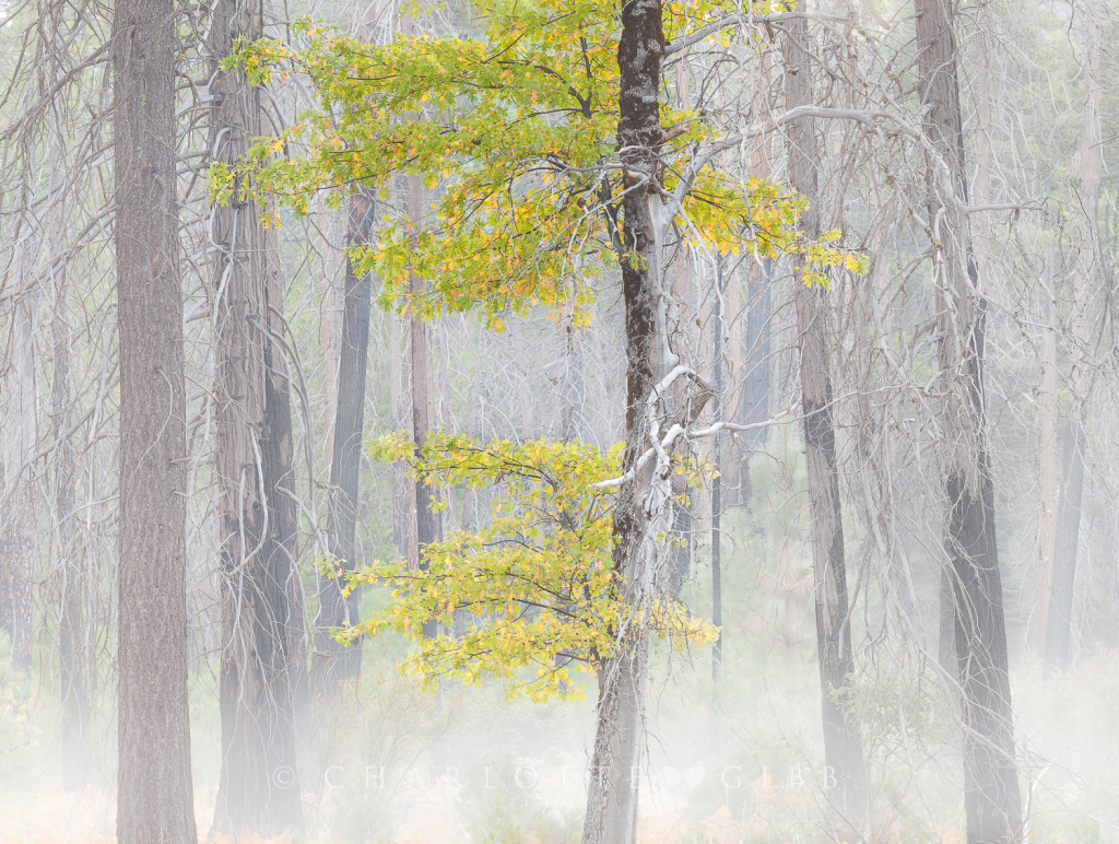 Living in the Fire Zone, Yosemite Valley, October 2014