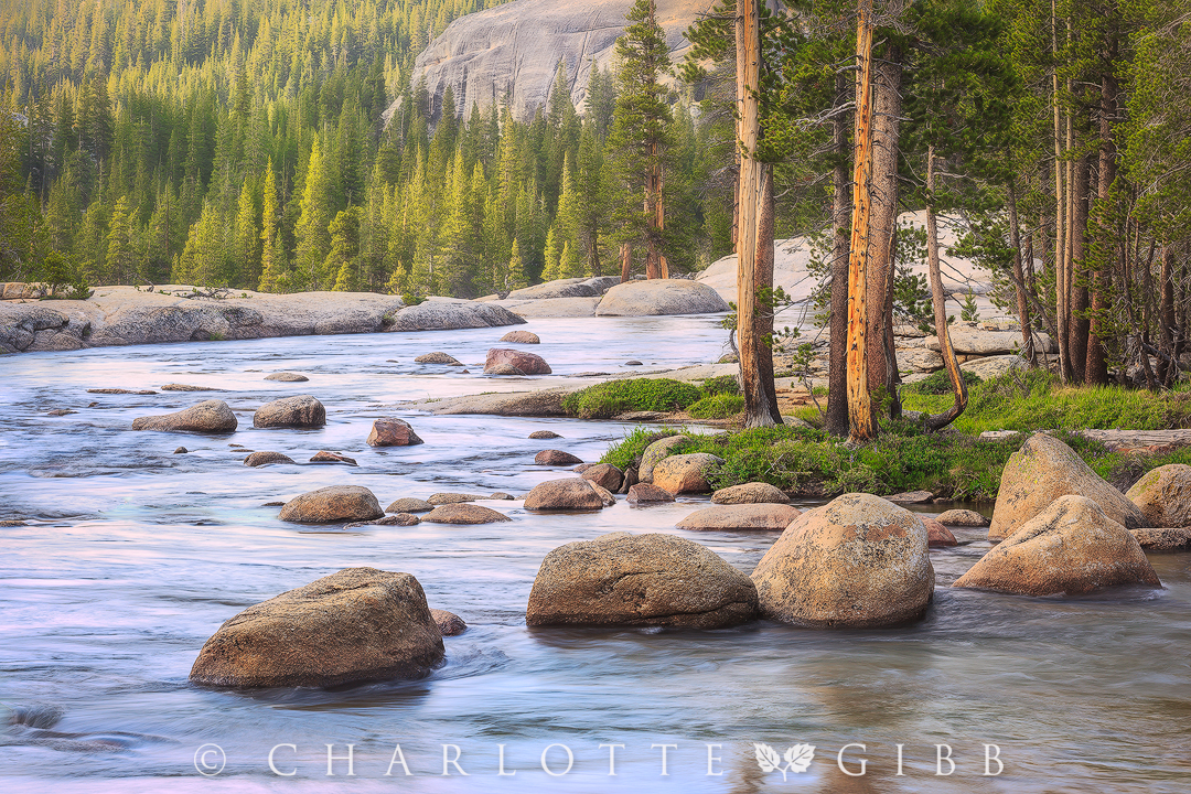 Lazy-Afternoon,-Tuolumne-River