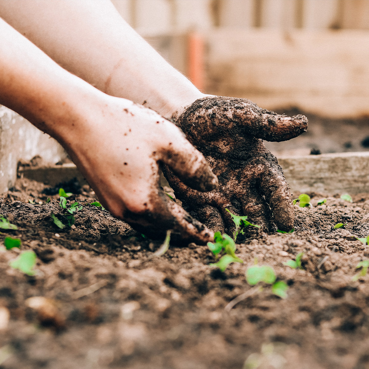 Time To Plant Your Garden