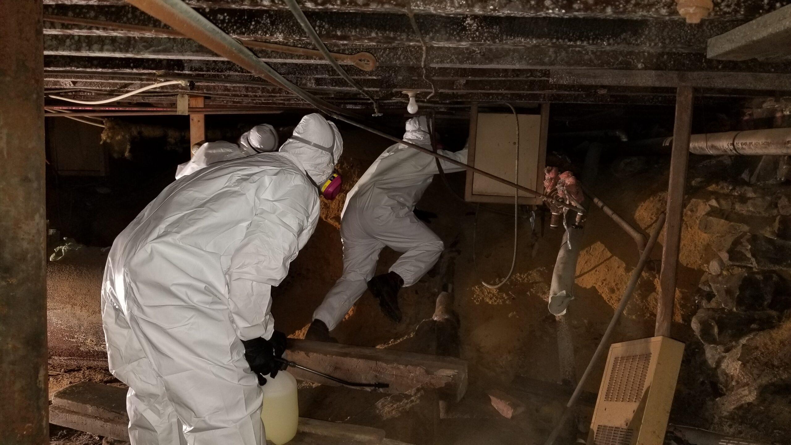 mold remediation basement