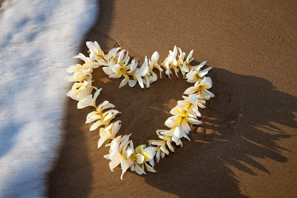 plumeria on beach
