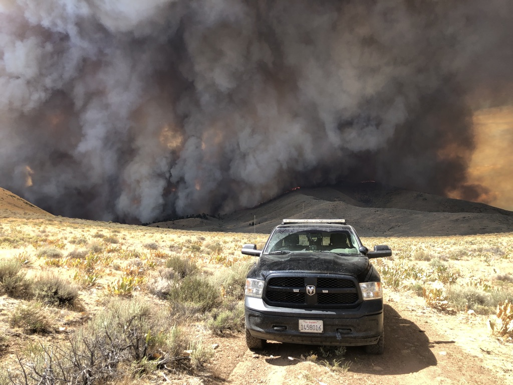 Wildfire Devastation