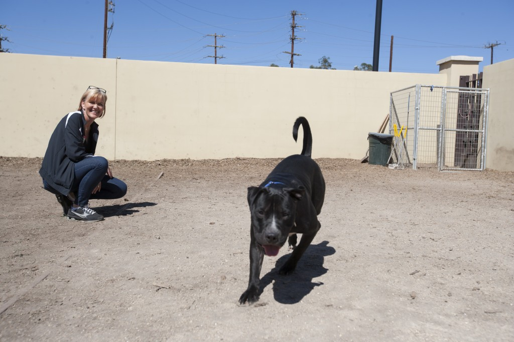 Kim Cloughesy, a former animal control officer, helps train hard to handle dogs such as pit bulls like Buddy, a black pit bull. Photo by: Mohammad Djauhari
