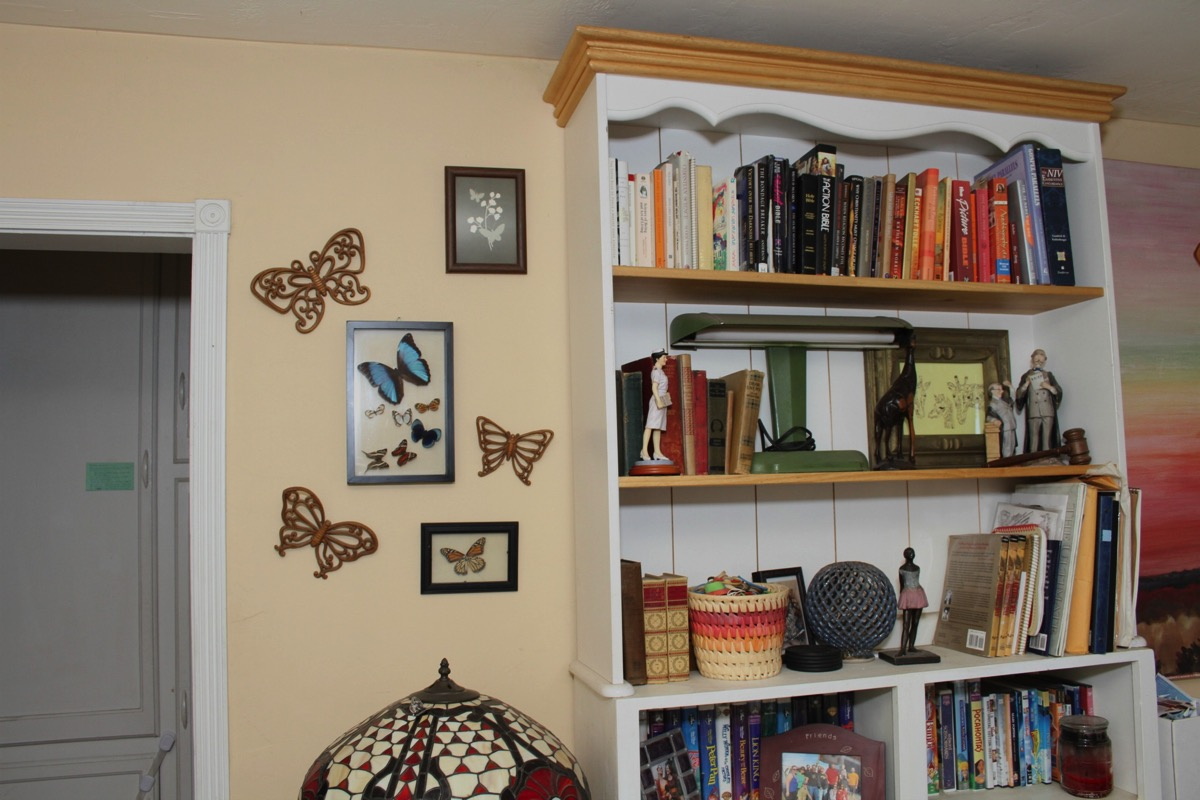 Butterfly collection on wall
