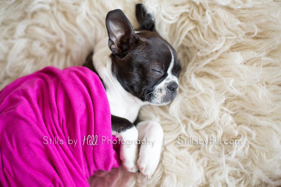 san diego puppy photography
