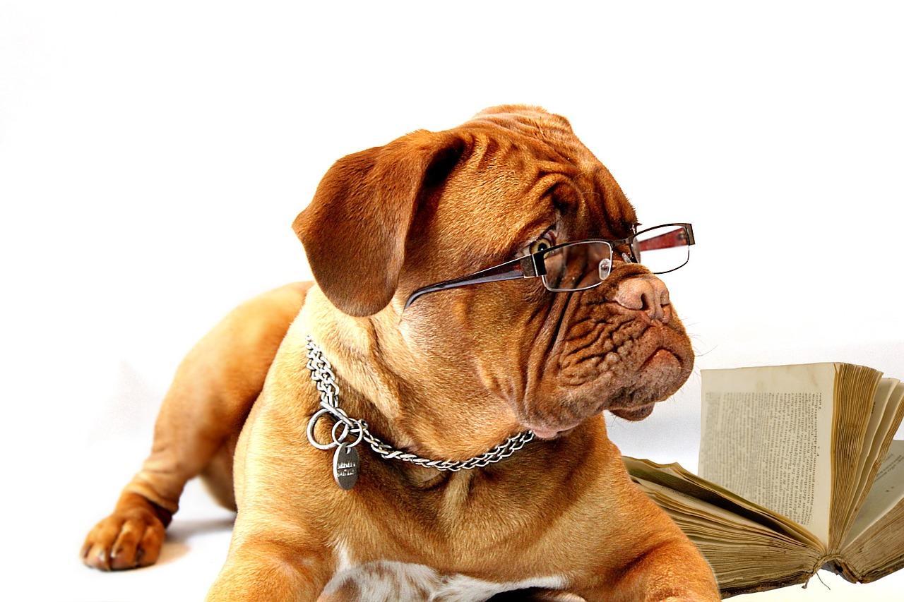 Perro intelectual