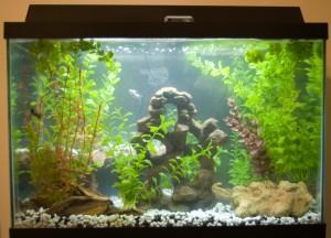 aquarium_fish_pets_661542_h