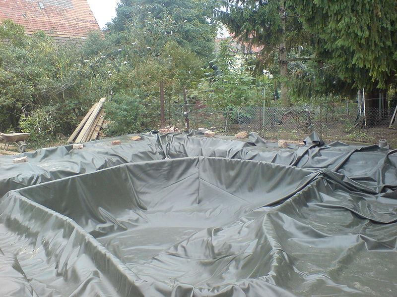 back yard  pond
