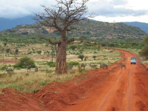 kenya_africa_safari_38275_o