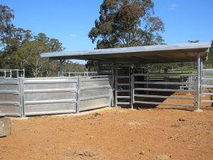 640px-Cattle_race