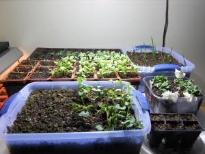 Indoor_garden