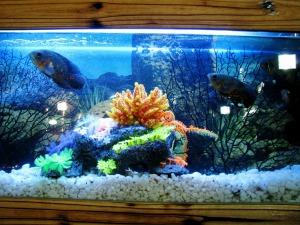 aquarium-390745_1280