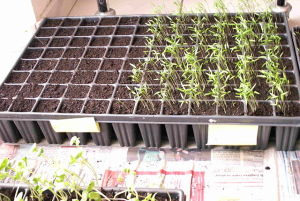 Horticulture_Tray3