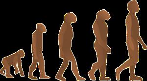 evolution-24560_1280