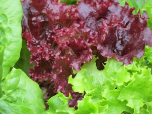 lettuce-540217_1280
