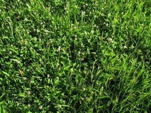 meadow-406157_1280