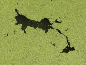 algae-112356_1280