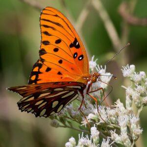 butterfly-822835_1280