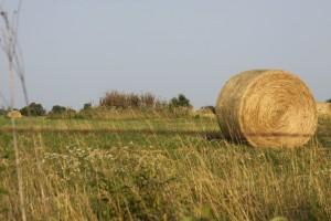 hay-bale-441064_1280
