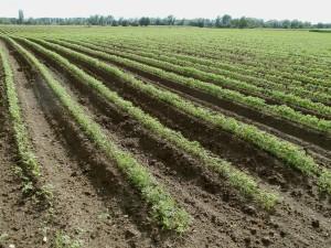 fields-837681_1280