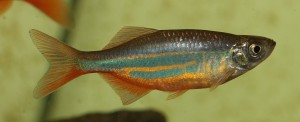 fish-764148_1280