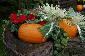 pumpkin-850539_1280