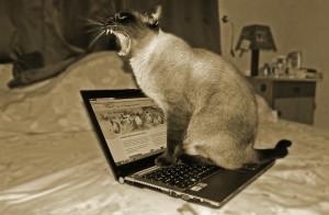 cat-244060_1280