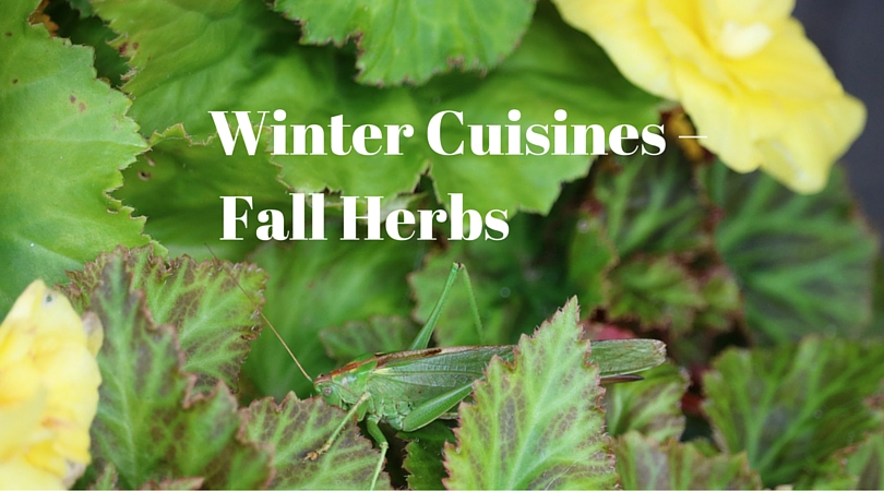 Winter Cuisines – Fall Herbs to bring you Delight!