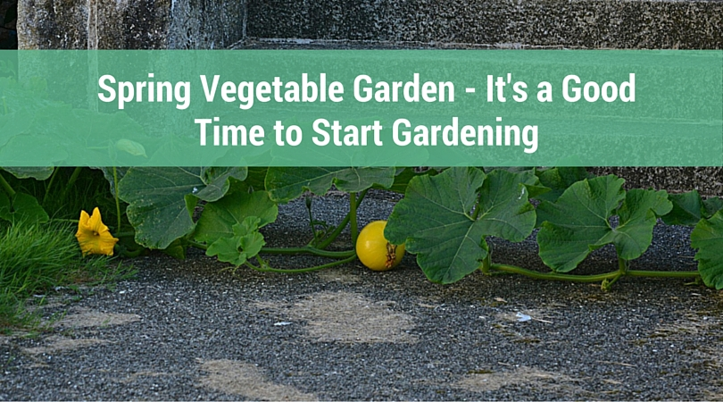 Spring Vegetable Garden - It's a Good Time to Start Gardening