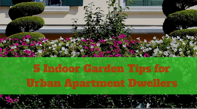 5 Indoor Garden Tips for Urban Apartment Dwellers
