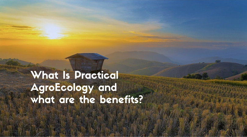 What Is Practical AgroEcology and what are the benefits?