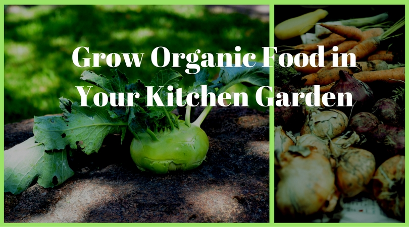 Grow Organic Food in Your Kitchen Garden