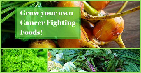 5 Plants that Fight Disease – Grow  Your Own at Home!