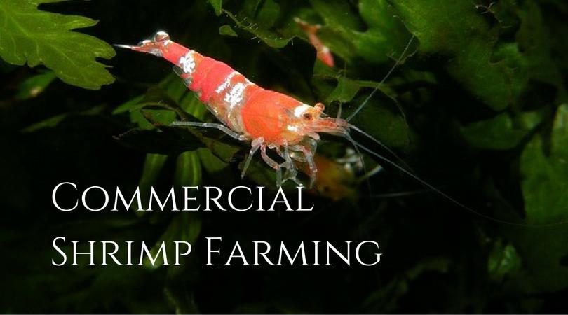commercial fish farming