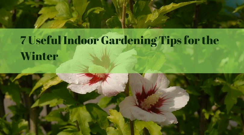 7 Useful Indoor Gardening Tips for the Winter