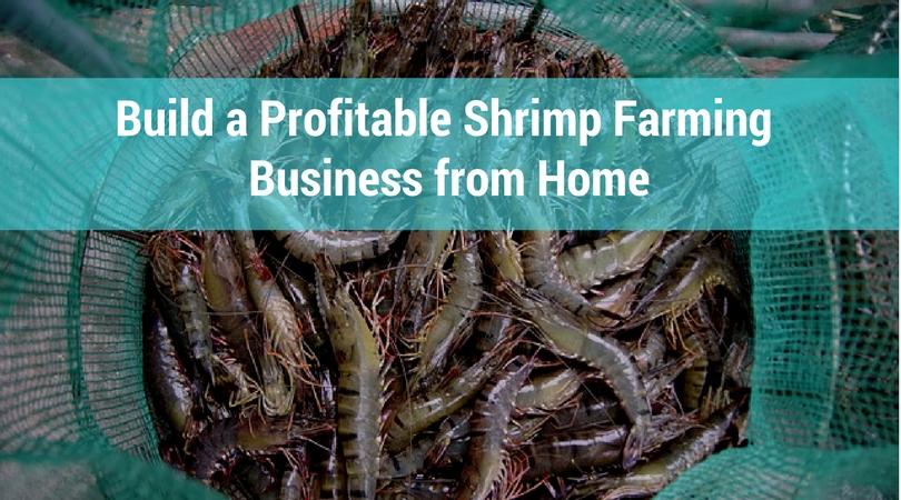 Build a Profitable Shrimp Farming Business from Home