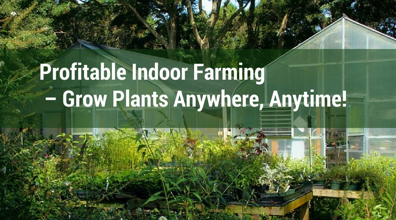 Profitable Indoor Farming – Grow Plants Anywhere, Anytime!