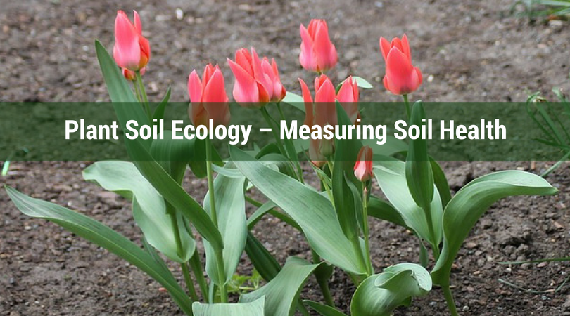 Plant Soil Ecology – Measuring Soil Health