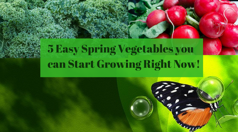 5 Easy Spring Vegetables you can Start Growing Right Now!